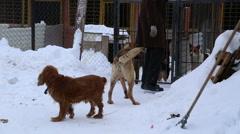 Animal shelter, volunteer hugging dog without leg - stock footage