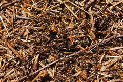 Ant hill .  close up Stock Photos