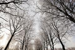 Stock Photo of trees .  winter season.