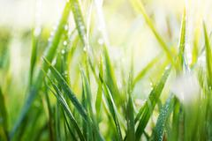 Green background, detail of grass Stock Photos