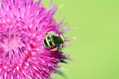 bee on flower spring season macro - stock photo