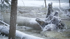 One of the many uprooted trees in the river Stock Footage