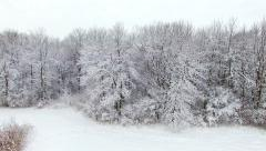 Beautiful forest trees frosted in fresh blizzard snow Stock Footage