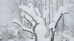 The leafless tree with white snow on it Stock Footage