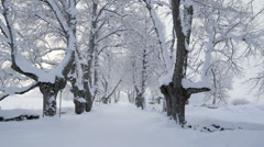 Thick white snow on the trees Stock Footage