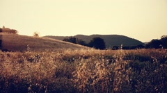 Tuscan countryside in summer at sunrise - stock footage
