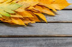 yellow leaves autumn leaf on wooden background pattern - stock photo