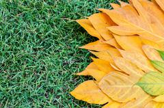 Yellow leaves autumn leaf on green grass background Stock Photos