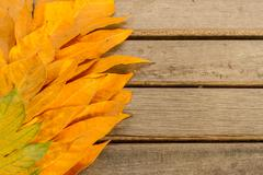 yellow leaves autumn leaf  over wooden vintage background - stock photo