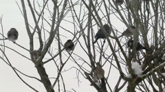 Group of various perching birds winter ice snow2 Stock Footage