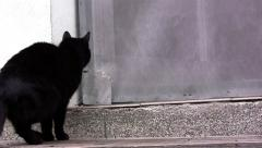 Black cat, curious, stand at the door and look in the house 1 Stock Footage