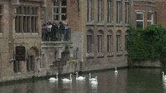 People watching and taking pictures of swans swimming on Dijver Canal in Bruges Stock Footage