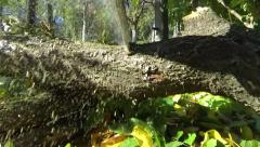 Chainsaw blade which cuts a tree trunk. Wood chips jumping everywhere 7 Stock Footage