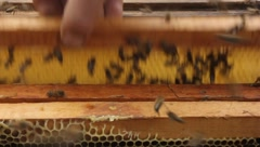 Work of beekeeper with bees Stock Footage