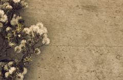 Dried wild flower - stock photo