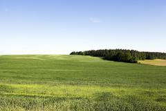 field with cereals - stock photo
