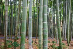 Bamboo Grove at Enkoji temple in Kyoto Stock Photos