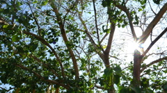 Under Ficus religiosa tree view in Thailand temple - stock footage