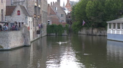 White swan and ducks swimming in Dijver Canal in Bruges Stock Footage