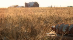 Fresh Bread At harvest Time In Wheat Field Stock Footage