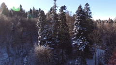 Aerial View Flight Above Winter Forest 19 Stock Footage