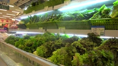 Korean grocery supermarket. Department of greens & vegetables. Stock Footage