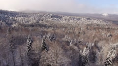 Aerial View Flight Above Winter Forest 25 - stock footage