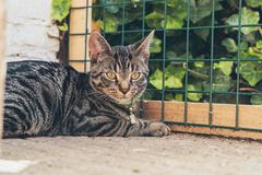 Young tabby cat lying in garden in front of fence. Stock Photos
