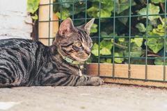 Young tabby cat lying in garden in front of fence. - stock photo