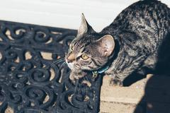 Alert young tabby cat on doormat. High angle view. Stock Photos