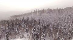 Aerial View Flight Above Winter Forest 33 Stock Footage