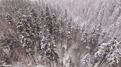 Aerial View Flight Above Winter Forest 34 Stock Footage