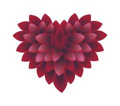 Red Dahlia Flowers in A Heart Shape Stock Illustration