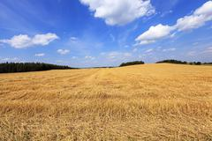 harvesting cereals  . Agriculture - stock photo