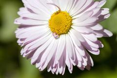 White flowers .  flowerbed Stock Photos
