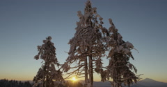 Sunrise Through Frozen Trees On Winter Snow Landscape Red Dragon Camera - stock footage