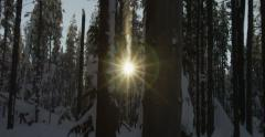 Sun beams through swaying snow forest trees, real time, red camera Stock Footage