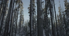 Swaying Snow Covered Trees in Frozen Winter Forest, Red Camera Stock Footage