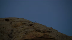 Static Shot of Raven Flying Away from Desert Rock at Night Stock Footage