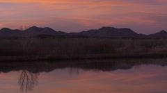 Line of Cranes Magenta Sky Pond Reflection - stock footage