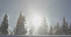 Powerful Winds Blow Snow Through Forest of Sun Ray Shadows, Red Camera - stock footage