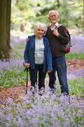 Stock Photo of Senior Couple Walking Through Bluebell Wood