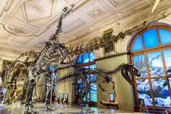 People Visit Dinosaur Prehistoric Exhibit At The Museum of Natural History - stock photo