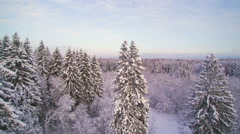 Covering the whole forest into white Stock Footage
