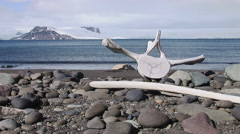 Old Whale bones on an Antarctic Beach Stock Footage