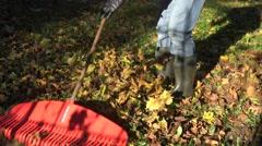 Raking fallen colorful leaves with rake tool in autumn garden. 4K Stock Footage