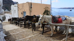 Tethered donkeys on the Streets of Santorini in the  tourist season Stock Footage
