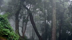 Heavy cloudy fog in magical scary creepy forest, pan left - stock footage