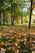Autumn forest . Belarus Stock Photos