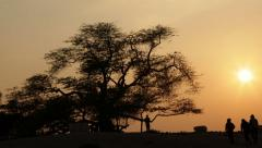 Local tourist attraction in Bahrain: Tree of life. 4k Timelapse. Camera movement Stock Footage
